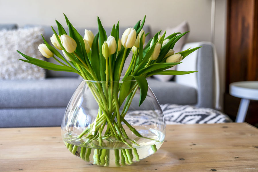 Tulips in livingroom 2 Couch Tulips Close-up Day Flower Foreground Focus Fragility Freshness Indoors  Interior Interior Design Living Room Nature No People Table Vase White Tulips