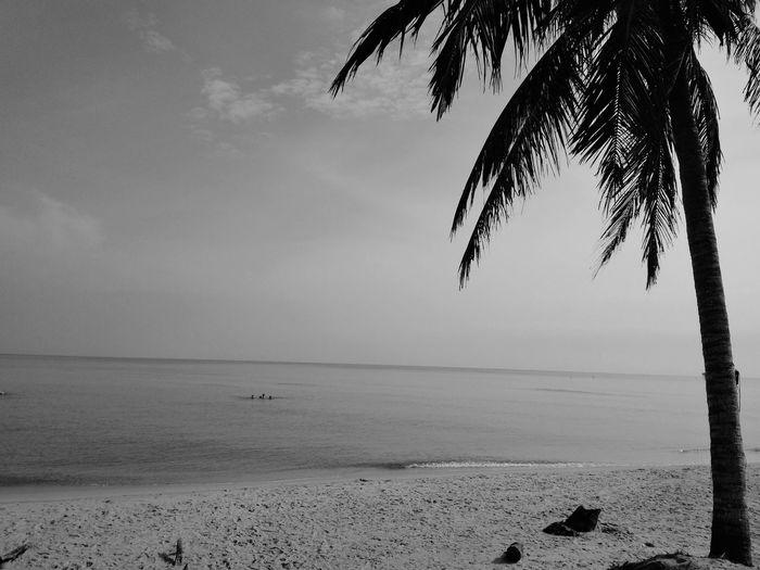 Water Tree Sea Beach Bird Sand Silhouette Sky Horizon Over Water Landscape Shore Tide Coastline Calm Seascape Sunset Coconut Palm Tree Postcard Flamingo Low Tide Pebble Beach Coast Wave Coastal Feature Rushing Marram Grass Sandy Beach Ocean Rocky Coastline Surf