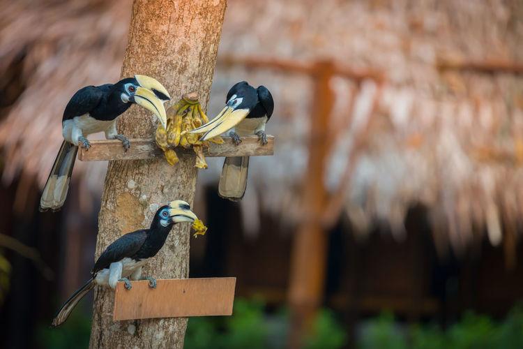 Close-up of birds eating banana