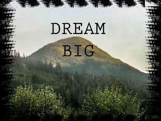 Dream Big Tree Plant Communication Text Nature No People Sky