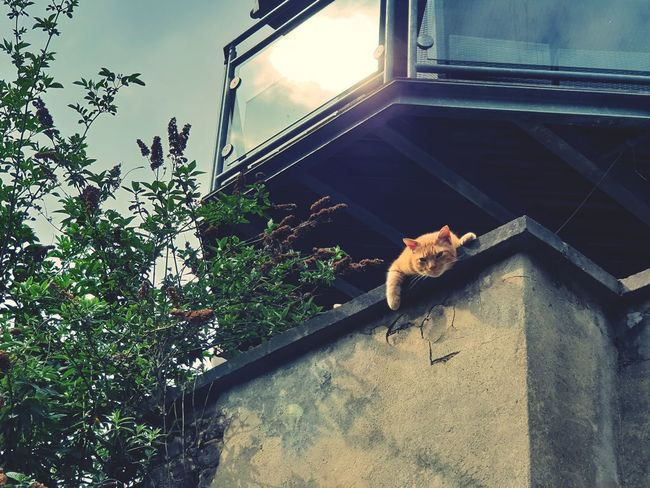 Cat Lazy Warm Forsale Relax Chill Ginger Goodafternoon London City Trees Beautiful Park Like Follow Comment Londonlife Colourful Ded Previously Light Third 2018 Eyemphotography Beauty Shapes Haunt Landscape Colours Dark Visual Creativity Reptile Pets Window Sky