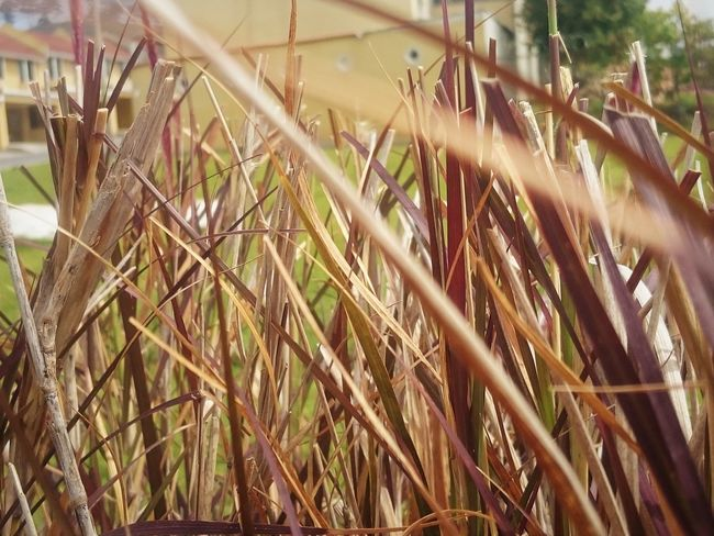 Abundance Beauty In Nature Close-up Day Detail Focus On Foreground Grass Green Color Growing Growth Hojas Hojas Secas Leaves Naturaleza Nature No People Outdoors Plant Rural Scene Selective Focus Tranquility Twig Color Palette Maximum Closeness