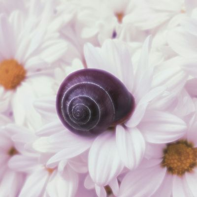 ..Sleeping Beauty.. Snail Dreamy♡ Dreaming Sleeping Sleepingbeauty Floral Nature Photography Macro Naturewhisperers Naturelovers