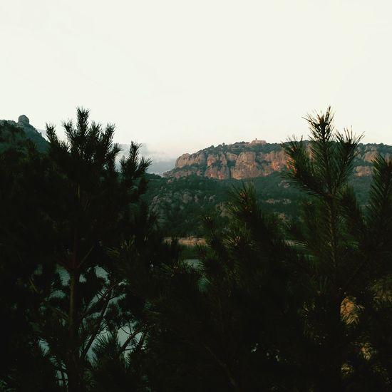 Abetos Trees And Nature View Outdoor Photography Muntanya Catalunyaexperience