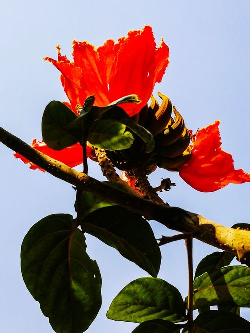 THE RED FLOWERS Leaf Nature Red Flower Plant No People Fragility Day Sky Freshness Beauty In Nature
