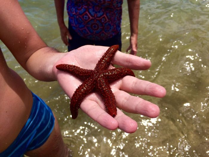 Cropped Hand Of Boy Holding Starfish