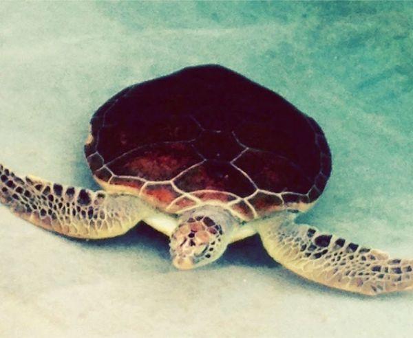 カメ2\(^o^)/ Aquarium Turtle Cute Japan 水族館 江の島