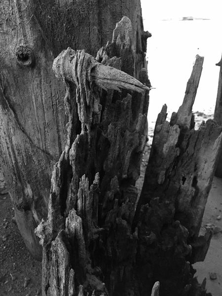 Faces In Nature I See Faces Black And White Sand Views Beach Photography Beach What Do You See? Still Life Perspective Abstractions Abstract Nature Faces In Places EyeEm Exploring Landscape Textures And Surfaces Driftwood Landscape_photography Shapes In Nature  Landscape Photography Landscape_Collection Old Dirty