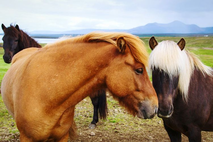 Horse Animal Domestic Animals Mammal Outdoors Livestock Animal Wildlife Rural Scene Togetherness Animal Themes Close-up Nature Horse Photography  Horselove Landscape Friendship