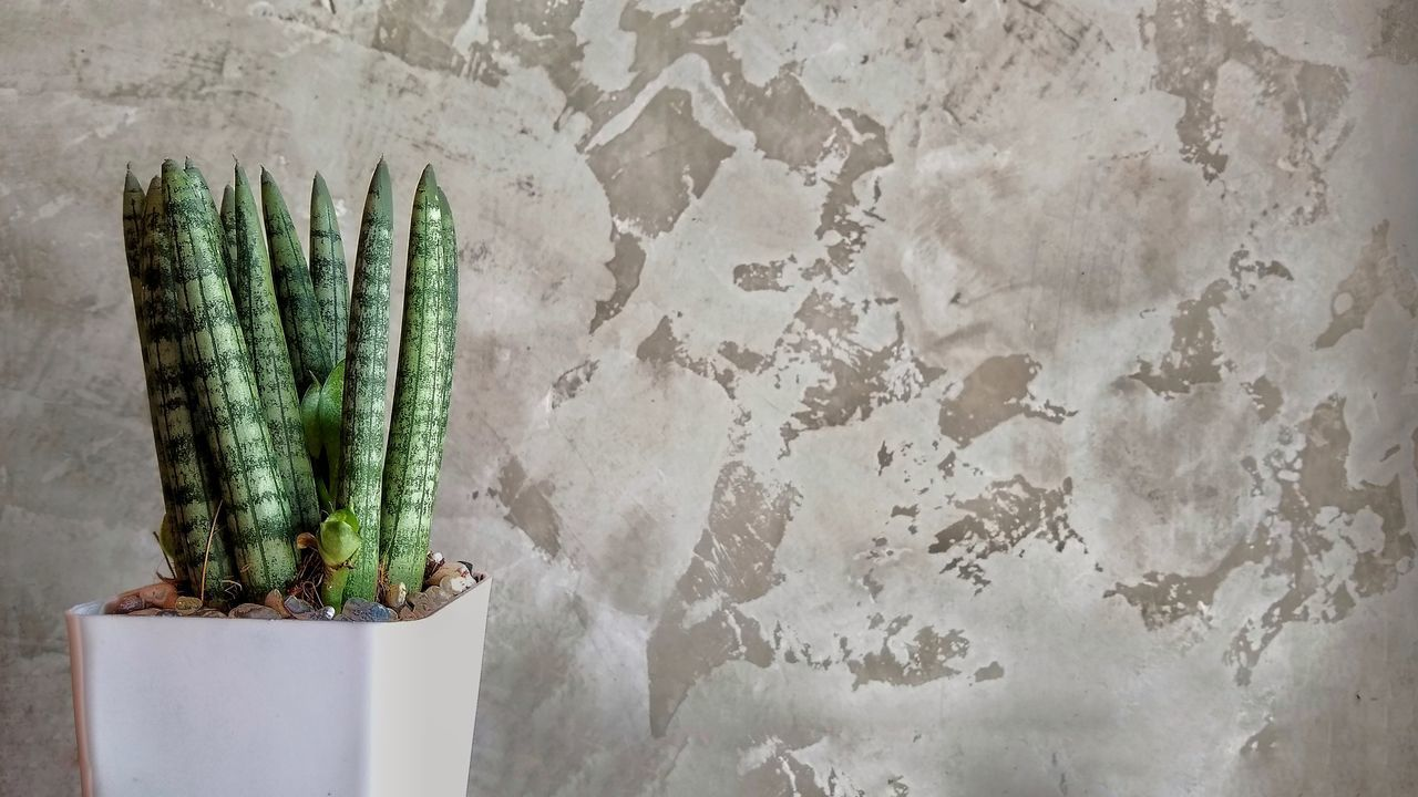 HIGH ANGLE VIEW OF POTTED PLANT ON WALL