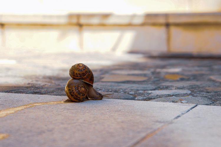 Close-up of snails on footpath