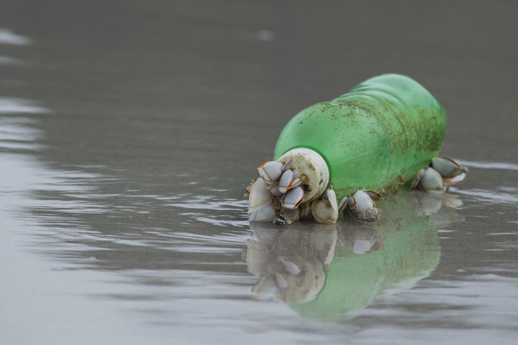 Close-up of seashells on plastic bottle