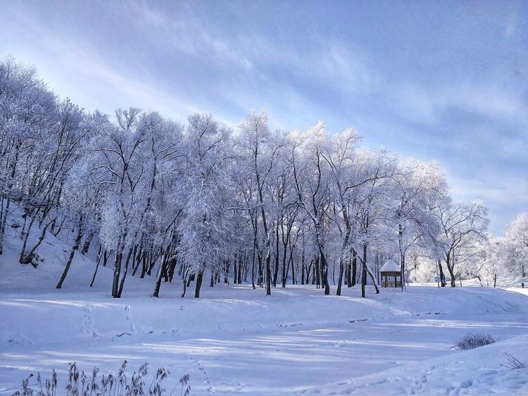 Winter Beauty In Nature Cold Temperature White PhonePhotography Phone Morning Biutiful Light And Shadow -15°C Love Good Morning Snow Winter Cold Temperature Tree Nature Beauty In Nature Pine Tree Frozen No People Landscape Day Forest Sky Cloud - Sky