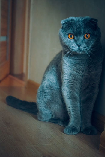 Cats Of EyeEm