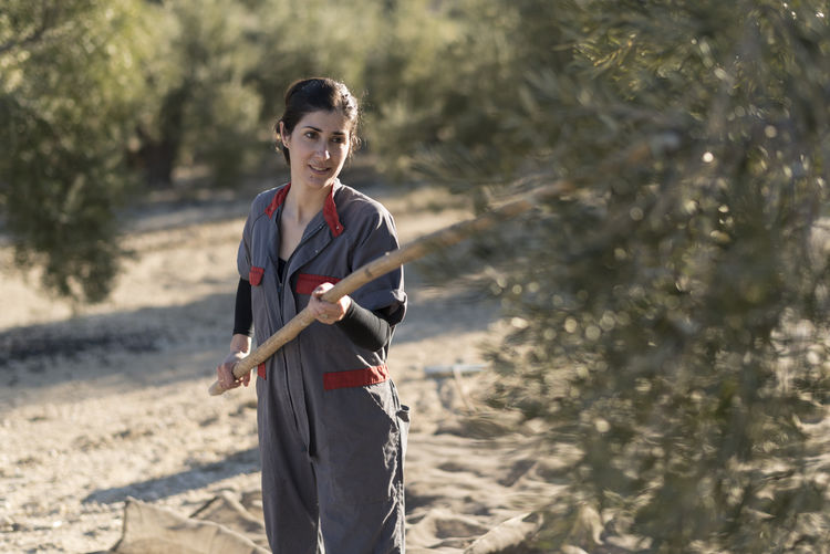 Farm worker holding bamboo while working by olive tree