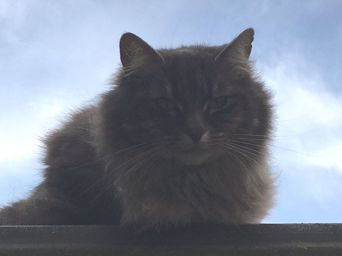 Cat On A Tin Roof Cat♡ Cat Lovers Nature I Love My Cat ❤ Hanging Out