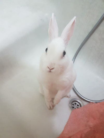Que me quieres que??? One Animal Domestic Animals Conejo <3 Bañera Intriga Rabit Love ♥