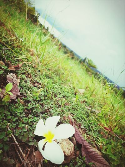 flower on ground
