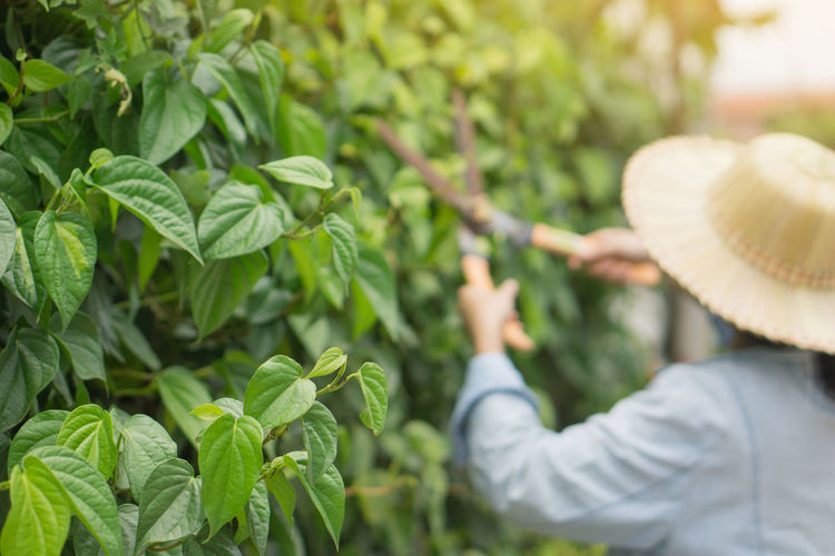 Midsection of woman with fresh green plants in farm