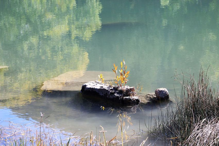 Water Lake Plant Reflection Nature Day No People Beauty In Nature Tranquility Flower Animals In The Wild Growth Animal Flowering Plant Outdoors One Animal Animal Themes High Angle View Vertebrate Floating On Water