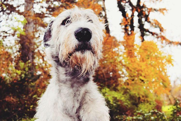 Dog Autumn