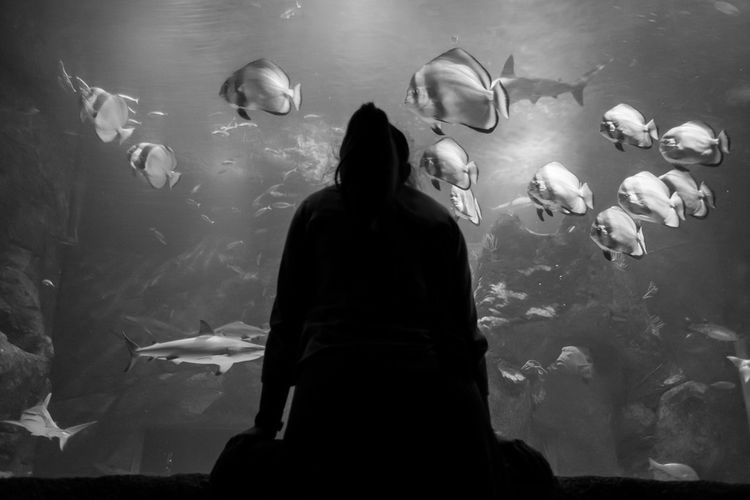 Rear view of silhouette woman standing by fish tank in aquarium