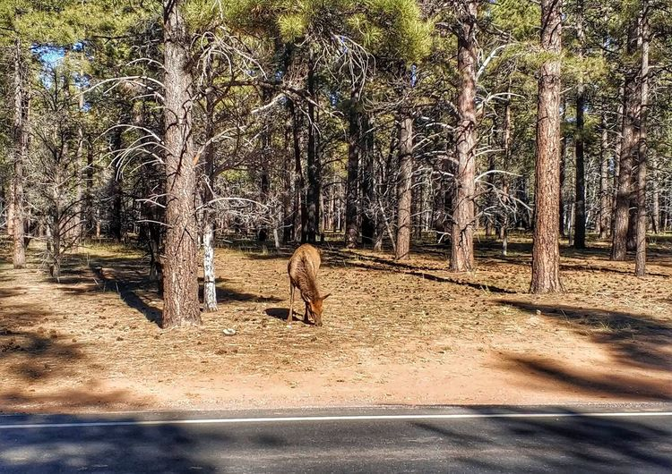 View of horse on road amidst trees in forest