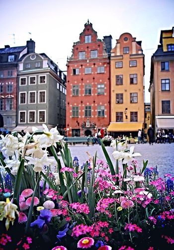 Typical houses in Stortorget, Gambla stan