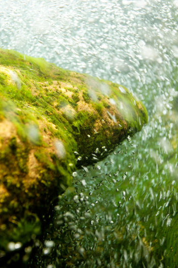 High angle view of moss growing in lake