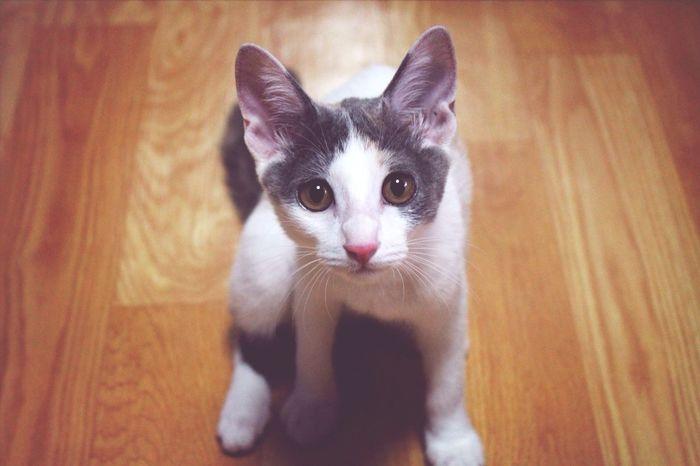Cat Eye Contact