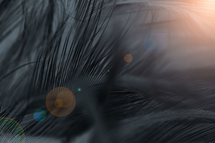 Close-up Animal Themes No People Animal Lens Flare One Animal Nature Selective Focus Outdoors Softness Motion Pets Mammal Domestic Animals Pattern Body Part Domestic Sun Day