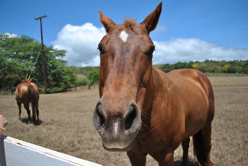Animal Themes Day Domestic Animals Field Herbivorous Horse Livestock Mammal Nature No People One Animal Outdoors Portrait Sky Standing Tree