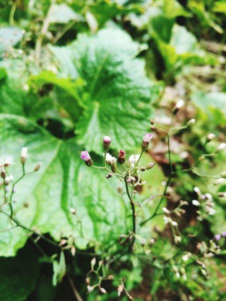 ดอกหญ้า HuaweiP9 Flower Beauty In Nature