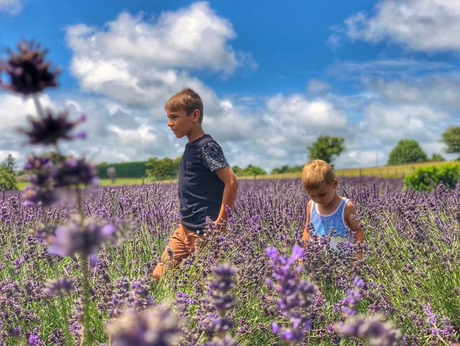 Boys Flower Growth Field Lavender Nature Plant Beauty In Nature Childhood Blond Hair Cloud - Sky Purple Outdoors EyeEmNewHere