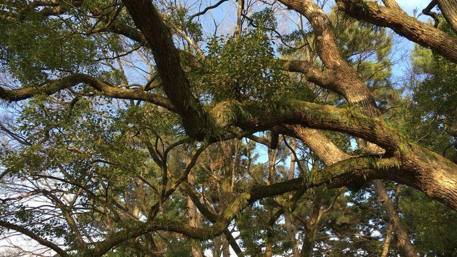 Kyoto Tree Kyoto,japan Tree Nature Forest Leaf