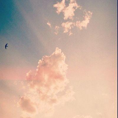 Dois dias antes do tempo ficar nublado :/ Sun Sunny InstaTags4Likes Sunnydays sunnyday sunlight light sunshine shine nature sky skywatcher thesun sunrays photooftheday beautiful beautifulday weather summer goodday goodweather instasunny instasun instagood clearskies clearsky blueskies lookup bright brightsun