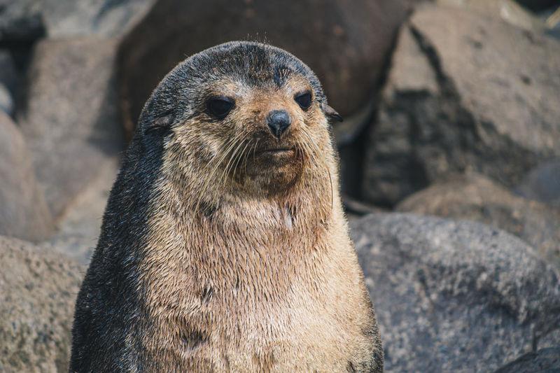 Close-up portrait of a seal