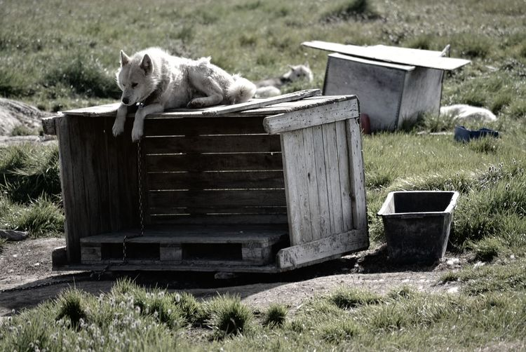 Dog lying on field
