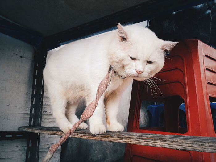 White cat looking away