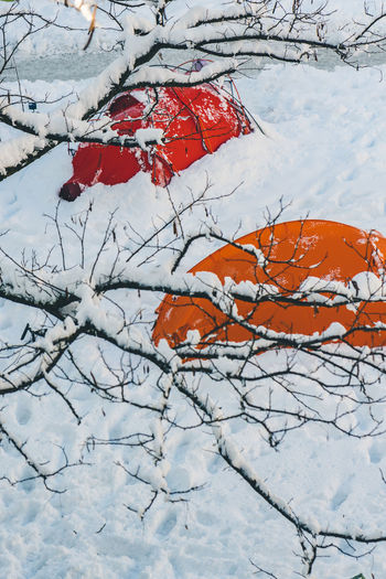 Camping in the winter forest Winter Snow Cold Temperature Tree Branch Plant No People Nature Scenics - Nature Covering Beauty In Nature Tranquility Field White Color Land Day Tranquil Scene Red Frozen Outdoors Tent Camping Camp Cold