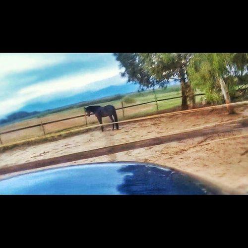 lovely horse. 🐴🌈🚙