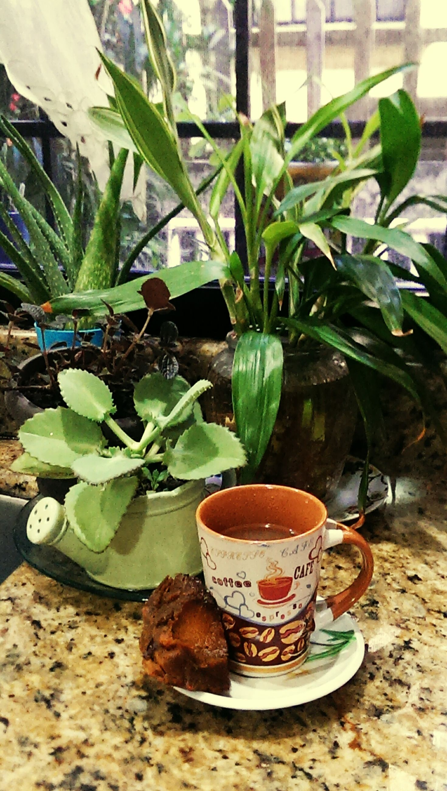 food and drink, freshness, table, potted plant, drink, leaf, plant, growth, refreshment, still life, healthy eating, indoors, close-up, coffee cup, day, focus on foreground, no people, flower pot, green color, vase