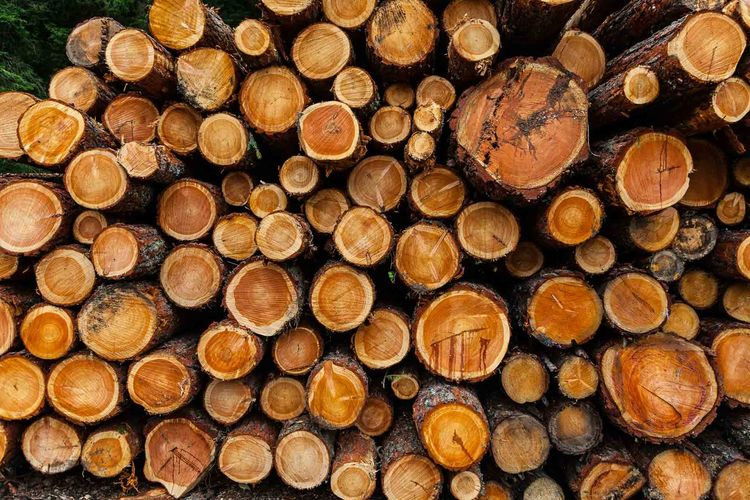 Abundance Day Deforestation Environmental Issues Firewood Forestry Industry Fossil Fuel Fuel And Power Generation Heap Large Group Of Objects Log Lumber Industry Mountain Nature No People Ring Stack Timber Treering Trees Wood - Material Woodpile Woodring Woods