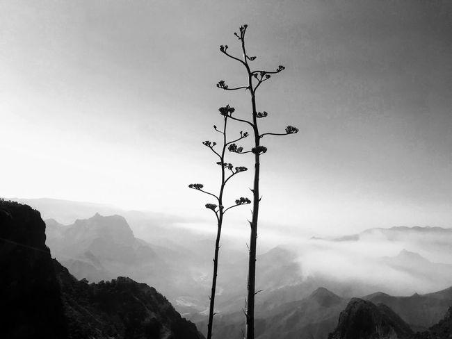 Naturaleza Barrancasdelcobre Coppercanyon Sky Nature Mountain Cloud - Sky Tranquility No People Beauty In Nature
