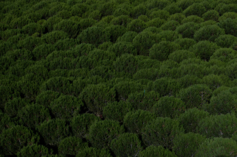 [ midnight ] - Patterns Everywhere Patterns In Nature Beauty In Nature Day Forest Green Color Growth Lush Foliage Minimal Minimalism Minimalist Photography  Minimalistic Minimalmood Nature No People Outdoors Pattern Pattern Design Patterns Patterns & Textures Plant Scenics Spruce Tree Tree WoodLand