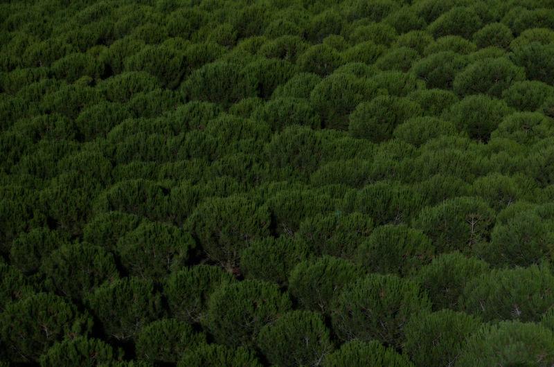 Full frame shot of trees in forest