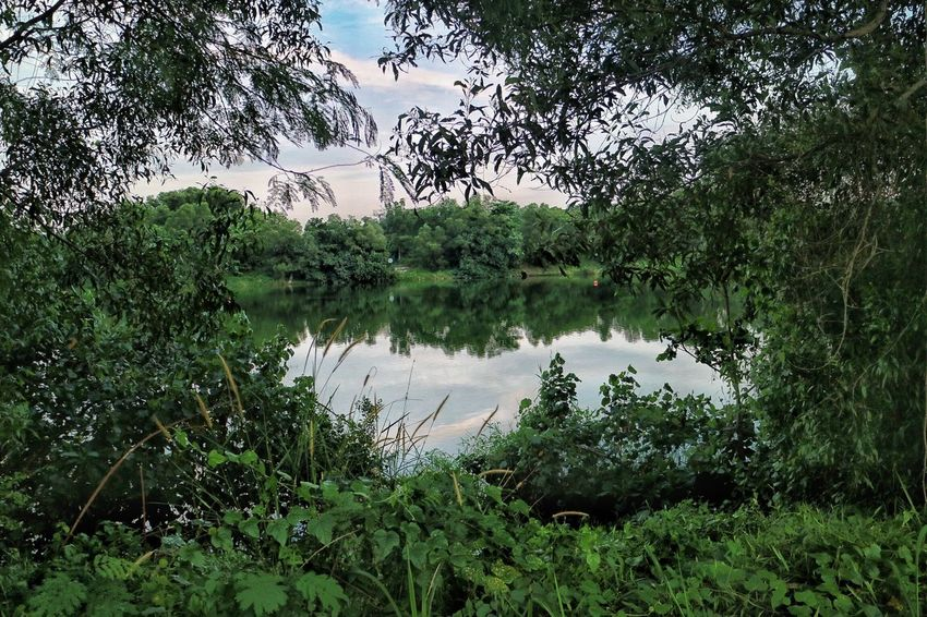 Lost in nature Beauty In Nature Grass Green Color Heart Lake Landscape Lush Foliage Nature Nparks Nparksbuzz Outdoors Reflection Sky Tranquil Scene Tranquility Tree Water