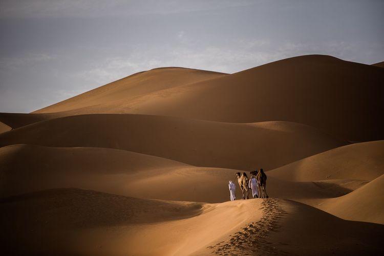 Men with camels on sand dune in desert against sky