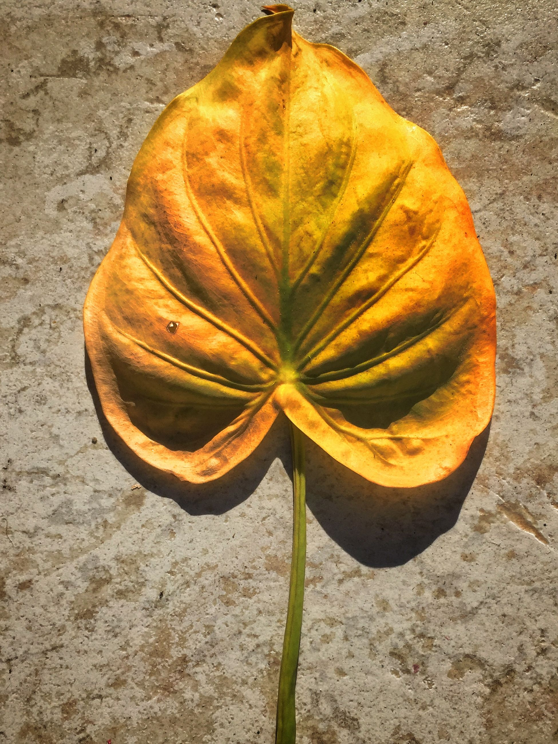 fragility, high angle view, flower, close-up, nature, leaf, petal, dry, yellow, beauty in nature, single flower, natural pattern, flower head, freshness, orange color, ground, directly above, single object, no people, outdoors