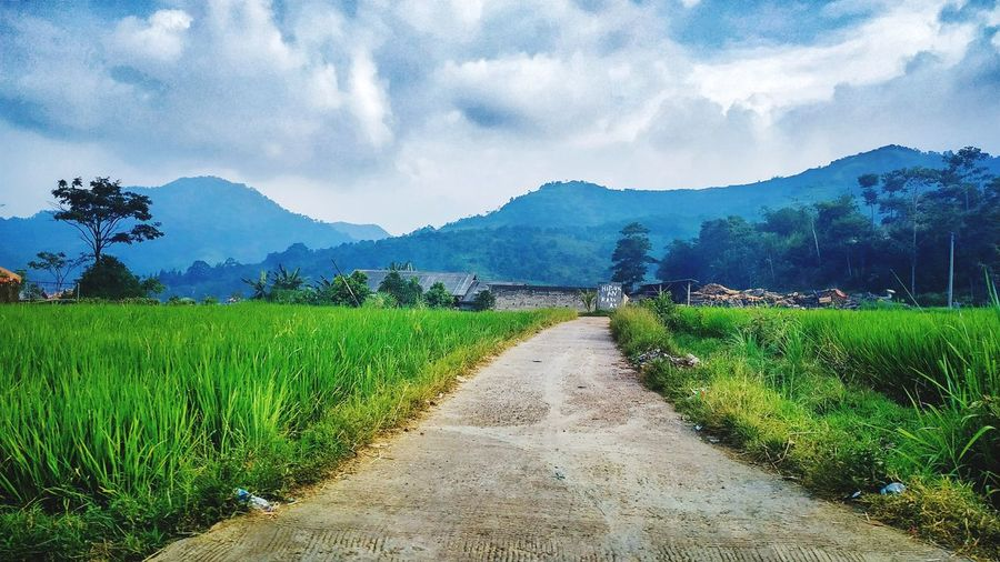 green green grass of home Tree Rural Scene Agriculture Mountain Irrigation Equipment Field Crop  Sky Landscape Cloud - Sky Rice Paddy Plantation Terraced Field Agricultural Field Farm